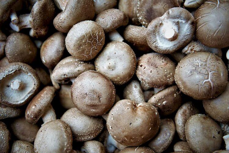 Hongos comestibles girgolas champignones