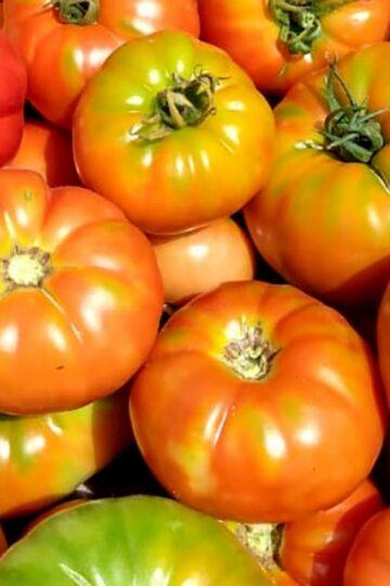 tomate_platense